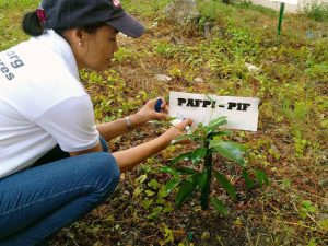 tree_planting3